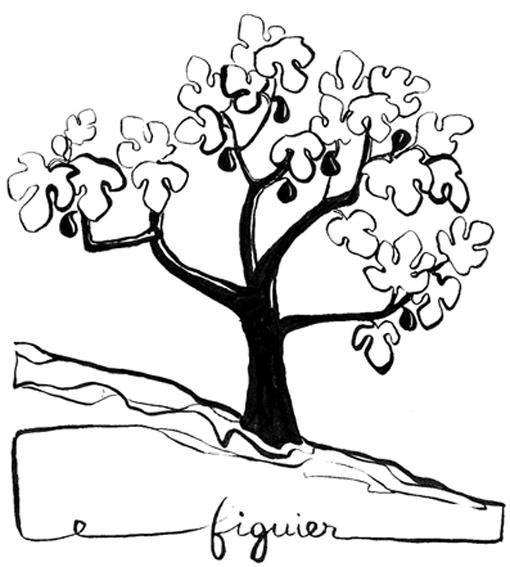 Texticules arbres - Dessin figuier ...